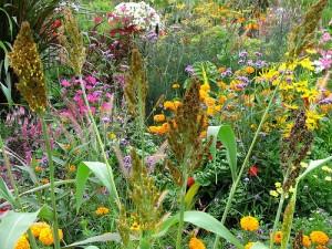 Разнотравье и разноцветье