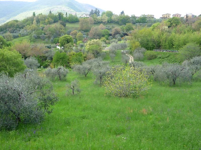Молодая зелень в горах