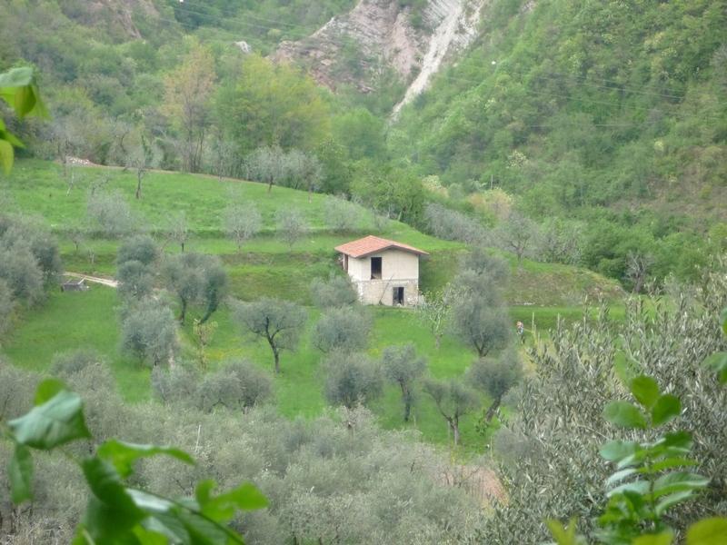 Домик среди олив