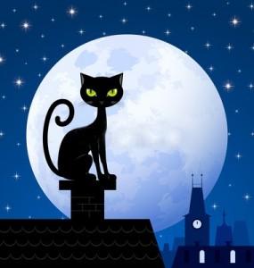 Черный кот на крыше