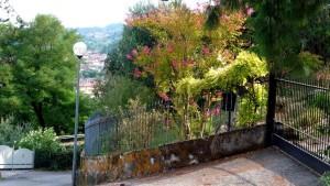 Цветущие деревья за забором
