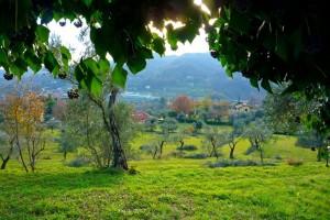 пейзаж сквозь листья плюща