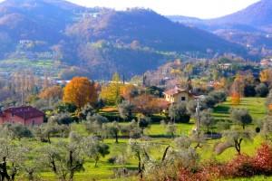 Пейзаж с оливковыми деревьями