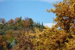 Горы, кипарисы, желтая листва деревьев