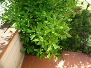 Зеленый кустик