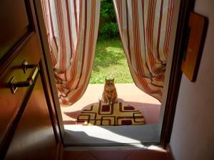 Рыжая кошка перед входом в дом