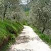 Дорога среди олив